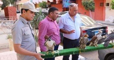 بالصور.. محميات البحر الأحمر تطلق سراح 5 صقور نادرة عثر عليها بحوزة خليجى