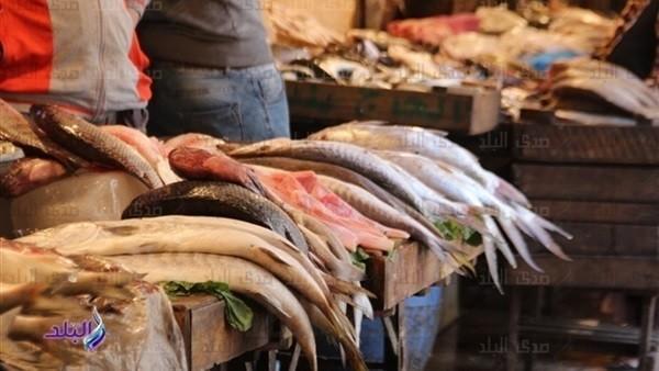 استقرار في أسعار الأسماك.. البلطي بـ17.5 والجمبري بـ155