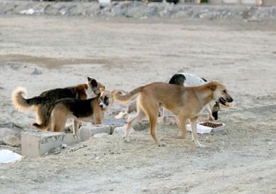 فيديو.. «الزراعة»: يجب مشاركة القوى المجتمعية لحل مشكلة الكلاب الضالة