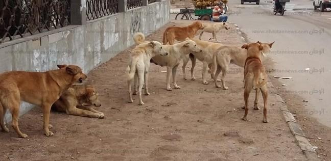 «كلب اتجوز سلعوة يخلفوا إيه».. بيطري يوضح لـ«الوطن» السر وراء عقر أطفال القليوبية