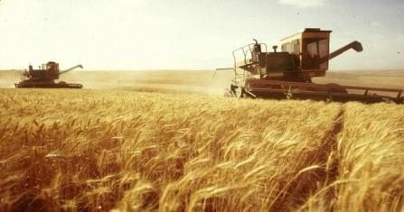 مصر تشتري 120 ألف طن من القمح الروسي