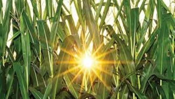 ستدمر الزراعات.. تحذيرات من موجة حارة بداية من الثلاثاء المقبل