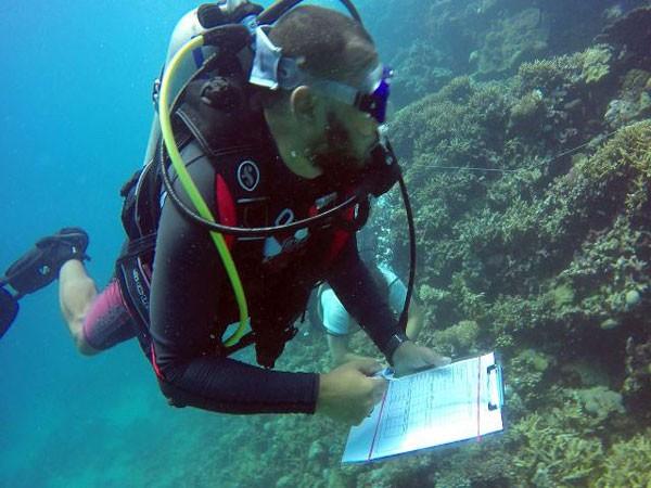 «البيئة» تنظيم دورة «الغواص البيئي» للعاملين بالمحميات البحرية