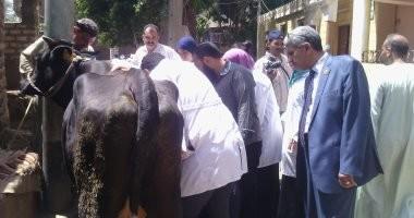 صور.. تحصين 170 ألف رأس أبقار وأغنام ضد مرض الجلد العقدى بأسيوط