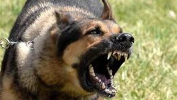 إخلاء سبيل صاحب كلبي التجمع وحبس خفير الفيلا