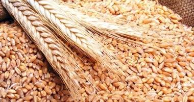 تجار: السعودية توقف شراء القمح والشعير الكنديين