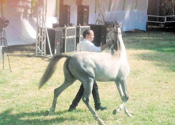 الزراعة تطلق فعاليات مهرجان محطة الزهراء للخيول العربية الأصيلة