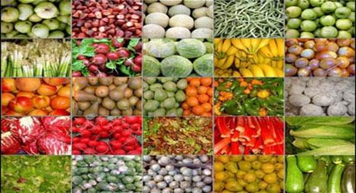 256 مليون دولار قيمة صادرات الإسماعيلية الزراعية خلال 10 أشهر