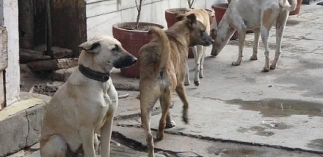 """""""الزراعة"""": الكلاب تعقر 398 ألف مواطن خلال العام الماضي.. ووفاة 65 منهم"""