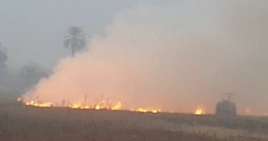 البيئة : التفتيش على ٤٤ منشأة صناعية بطنطا وتحرير ٤ محاضر حرق قش ارز