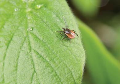 «مونسانتو» تواجه اتهامات بإنتاج مبيدات حشرات زراعية مسرطنة